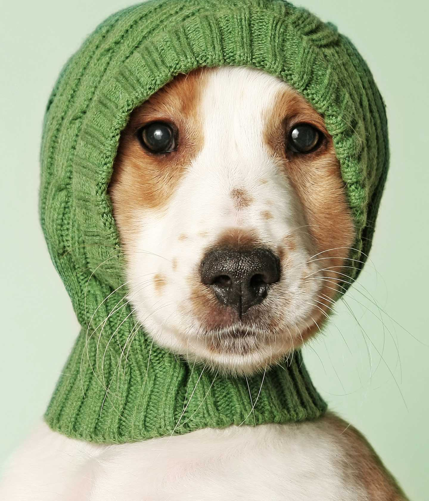 Puppy wearing a knitted cap