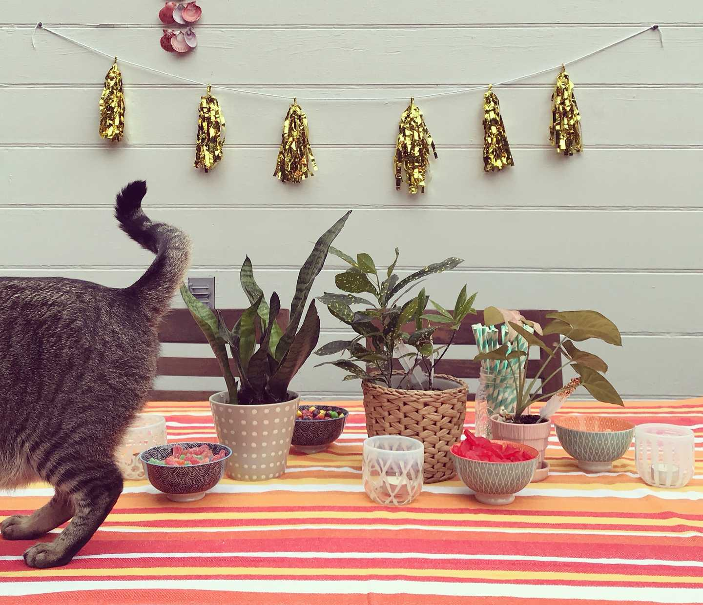 Cat up on table with decorations and treats